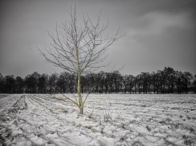 Week 1 - Tree20160106-_DSF1734-Bearbeitet