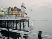 Brighton-9